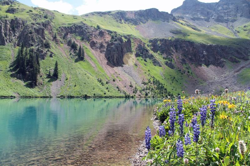 Alpine Lake Wildflowers